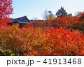 東福寺 紅葉 通天橋の写真 41913468