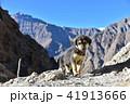 インドのヒマラヤ山岳地帯 スピティ谷のダンカル村 可愛い子犬と美しい山々 41913666
