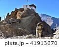 インドのヒマラヤ山岳地帯 スピティ谷のダンカル村 可愛い子犬と美しい山々 41913670