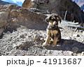 インドのヒマラヤ山岳地帯 スピティ谷のダンカル村 可愛い子犬と美しい山々 41913687