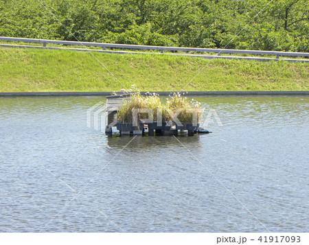 習志野市サクラ広場のカルガモ池の巣箱 41917093