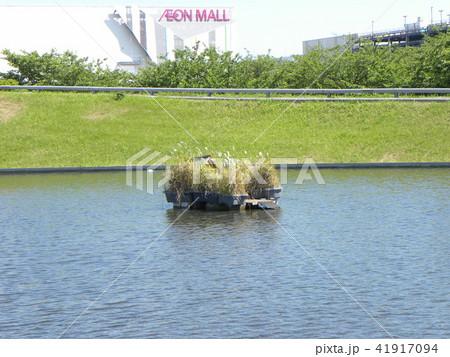 習志野市サクラ広場のカルガモ池の巣箱 41917094