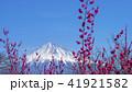 富士山 花 梅の写真 41921582