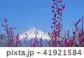 富士山 花 梅の写真 41921584