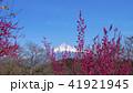 富士山 花 梅の写真 41921945