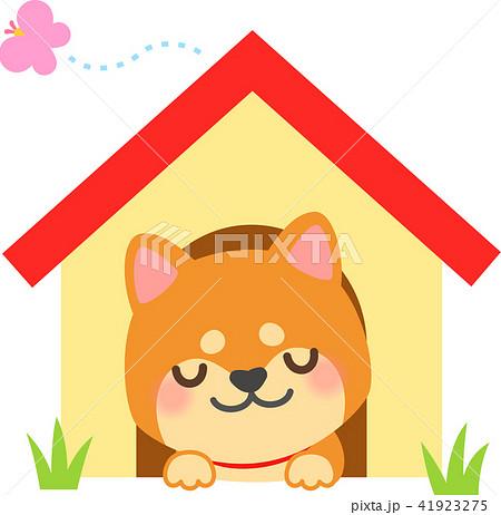 犬小屋で眠る柴犬 41923275