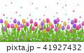 チューリップ チューリップ フローラルのイラスト 41927432