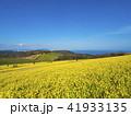 あわじ花さじき 淡路島 花畑の写真 41933135