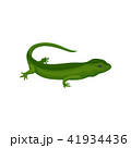 Gecko amphibian creature vector Illustration on a white background 41934436