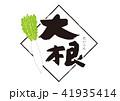 大根 水彩画 野菜のイラスト 41935414