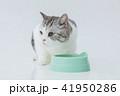 餌をたべる、食事中の猫 41950286
