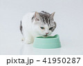 餌をたべる、食事中の猫 41950287