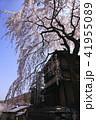 3月 京都東山の産寧坂(三年坂)の枝垂桜 41955089