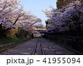 3月 琵琶湖疏水インクラインの桜 41955094