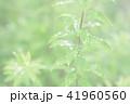 葉っぱと雫 緑 環境 イメージ 41960560