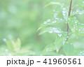葉っぱと雫 緑 環境 イメージ 背景 41960561