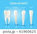 タイプ 種類 歯のイラスト 41960625