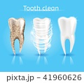 歯 きれい 綺麗のイラスト 41960626