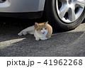 道端の猫 41962268
