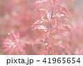 葉っぱと雫 赤 環境 イメージ 41965654