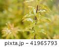 葉っぱと雫 黄色 環境 イメージ 41965793