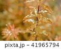 葉っぱと雫 茶色 環境 イメージ 41965794