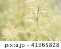 葉っぱと雫 緑 環境 イメージ 41965828