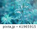 葉っぱと雫 緑 環境 イメージ 41965915