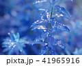葉っぱと雫 青 環境 イメージ 41965916