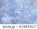 葉っぱと雫 青 環境 イメージ 41965917