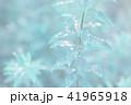 葉っぱと雫 緑 環境 イメージ 41965918