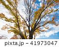 空 樹木 樹の写真 41973047