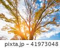 空 樹木 樹の写真 41973048