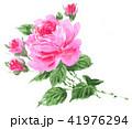 薔薇 花 ピンクのイラスト 41976294