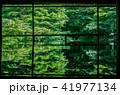 京都・瑠璃光院の春の特別参観(反射する新緑) 41977134
