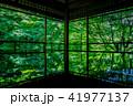 京都・瑠璃光院の春の特別参観(線対称) 41977137