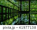 京都・瑠璃光院の春の特別参観(床に映る新緑) 41977138