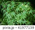 京都・瑠璃光院の春の特別参観(青紅葉) 41977139