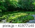 京都・瑠璃光院の春の特別参観(緑の庭園) 41977140