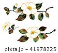 水彩画 椿 花のイラスト 41978225