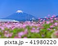 富士山 新幹線 静岡の写真 41980220