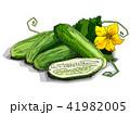 きゅうり キュウリ 胡瓜のイラスト 41982005