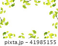 新緑のフレーム_イチョウ 41985155
