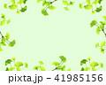 新緑のフレーム_イチョウ 41985156