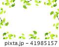 新緑のフレーム_イチョウ 41985157
