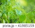 新緑イメージ_森の中の若葉 41985159