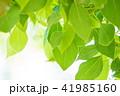 新緑イメージ_若葉 41985160