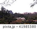 4月 桜咲く彦根城玄宮園(玄宮楽々園) 41985380