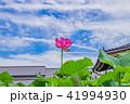 蓮 花 成福寺の写真 41994930