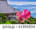 蓮 花 成福寺の写真 41994934